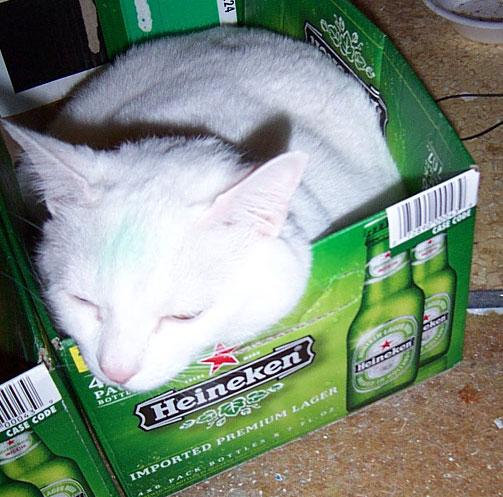 Overflowing Cat Box Blues